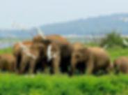 Sri lanka-Volunteer-Study-Educational-To