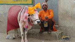 Pushkar-to-do-things-sightseeing-book-walking-tour-spiritual-offbeat-vedic-walks