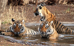 wildlife-offbeat-India-tour-luxury-rajasthan-tour-packages-vedic-walks-travel-tour-agency-operator-best