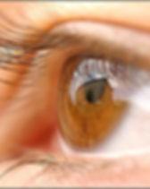 oeil brun.JPG