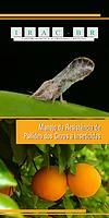 Manejo da resistência de  psilídeo dos citros a  inseticidas