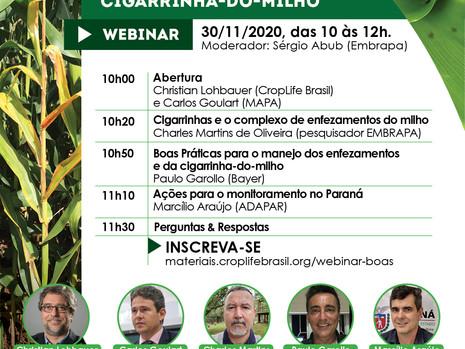 CropLife Brasil promove Webinar sobre problemas causados pela cigarrinha-do-milho