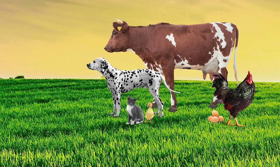 Megasetia_kv_packaging_animal_health_bac