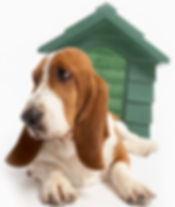 Hound Dog with Green Dog House
