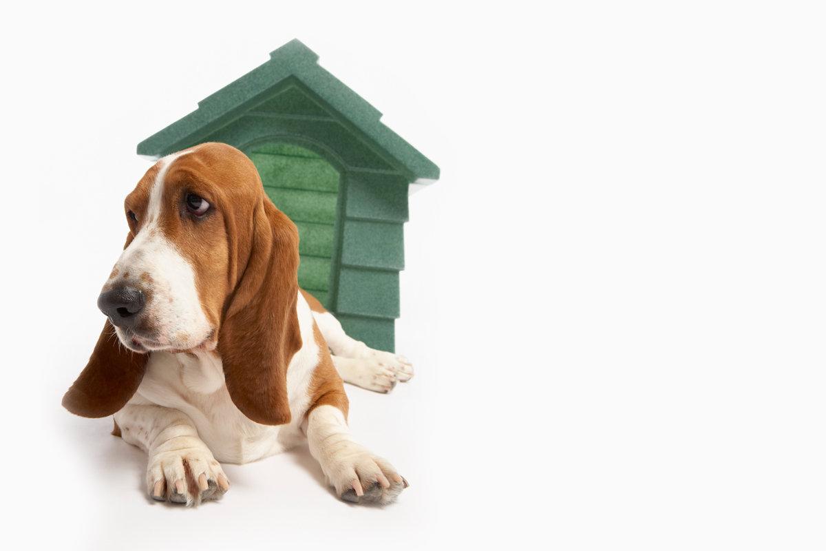 Adoption Home Visit