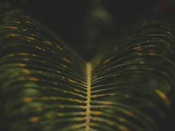 plantas 4x3 .jpg