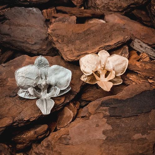 Brinco Phalaenopsis