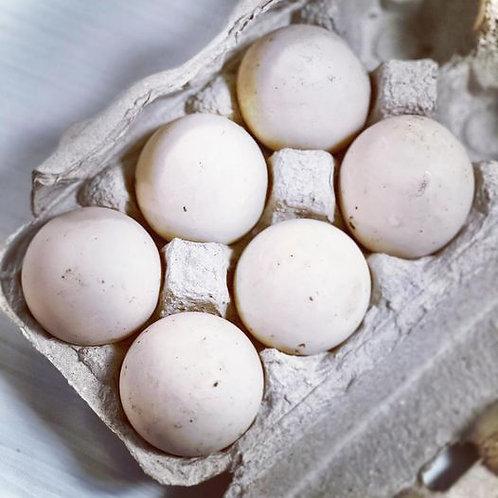 Welsh Harlequin Duck - Hatching Eggs (6)