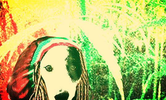 2097bea7959012d01faf6f3beb272c2e_edited_edited_edited_edited_edited.jpg