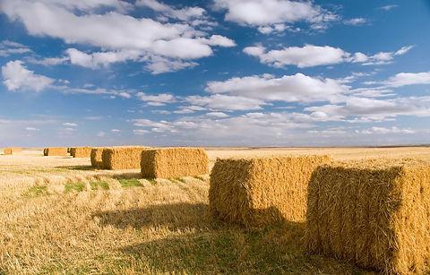 square-hay-bales.jpg