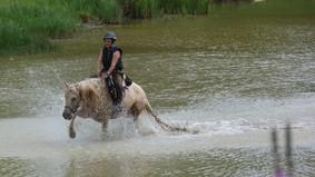 Les chevaux dans les étangs