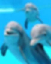 images dauphins.jpg