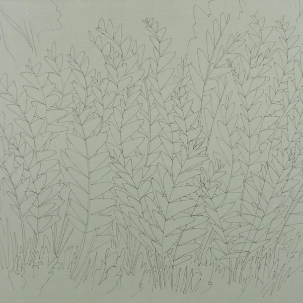 26883 - Ferns at Heart Lake