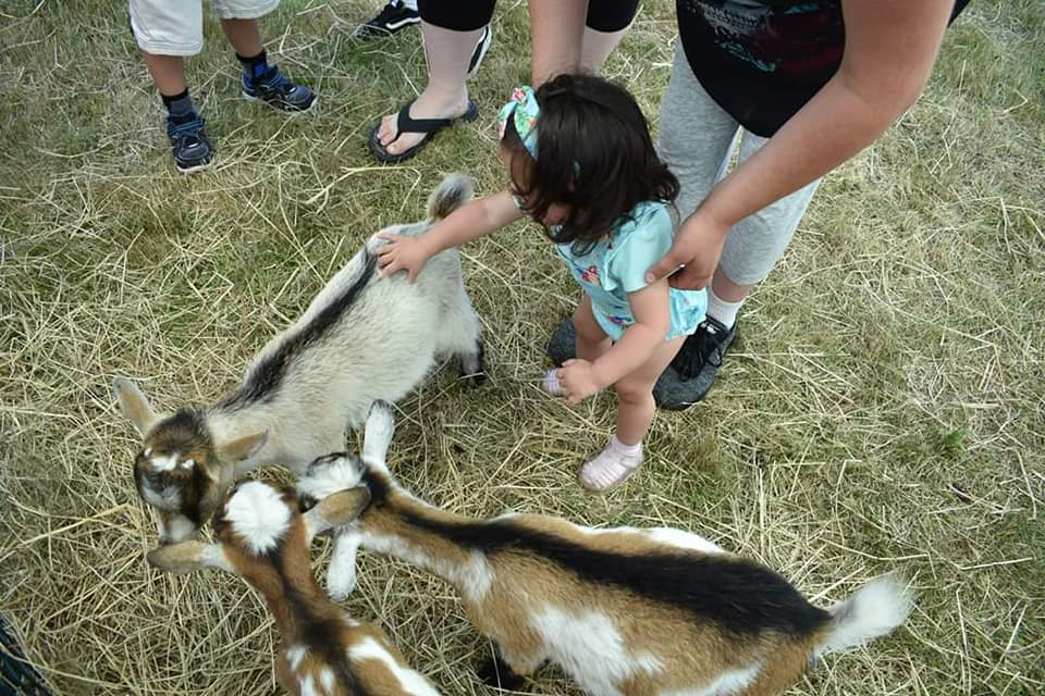 Kids Day-Petting Zoo Goats.jpg