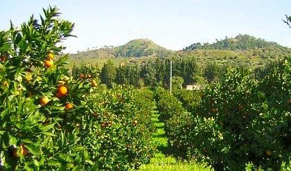 EU Citrus Crop situation