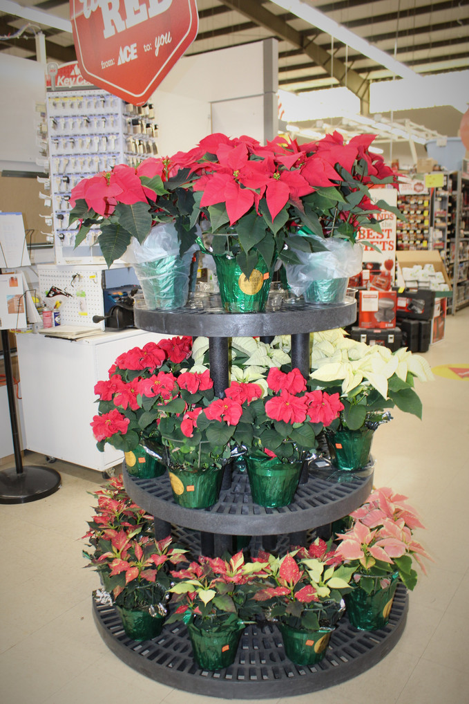 Poinsettias are here! Oxford & Talladega locations! Hurry before they are gone! Beautiful Christ