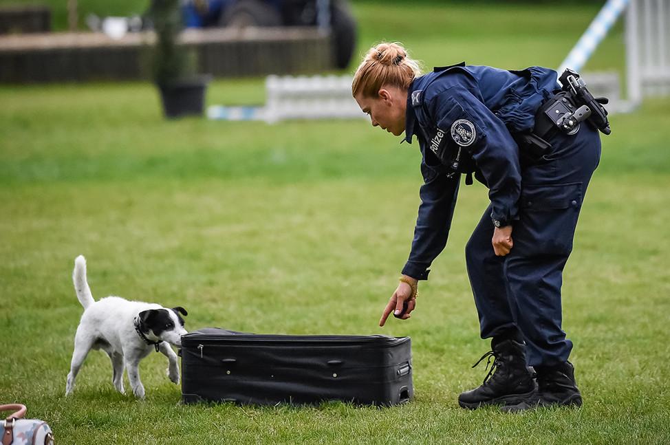 Polizeihunde-15.jpg