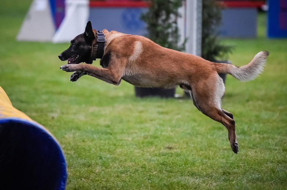 Polizeihunde-61.jpg