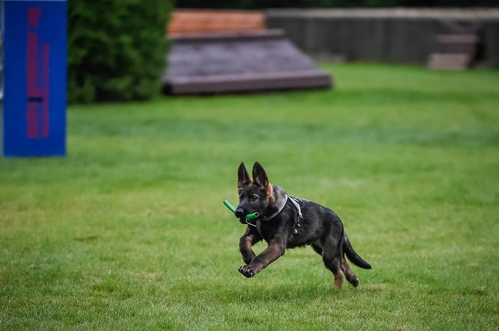 Polizeihunde-24.jpg