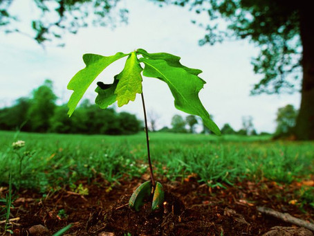 Save the planet, plant a tree
