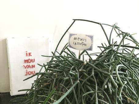 Rhipsalis cassutha