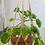 Thumbnail: workshop *macramé plantenhanger* 26 augustus '21