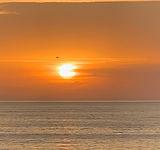 SunriseBird.jpg