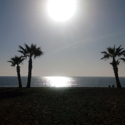 PalmSunset.jpg