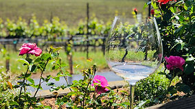 Russian River Valley Wine Tour