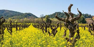 Dry Creek Valley Wine