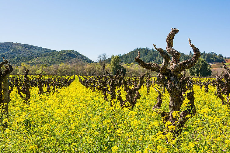 Dry Creek Valley Wine Tour