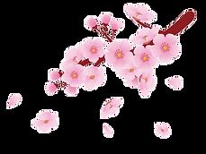 桜.png