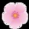 桜2.png