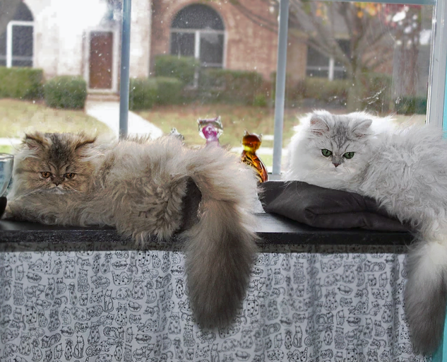 Amber & Aspen lounging in the kitty nursery