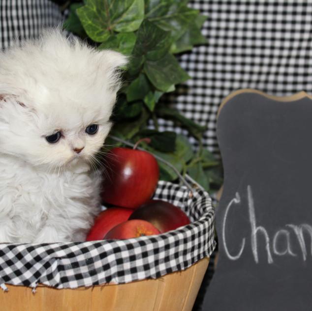 Chancy - 6 weeks