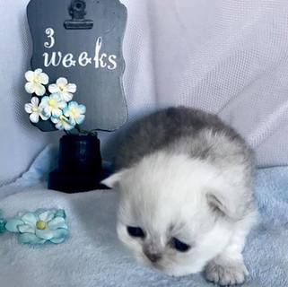 Brady - 2 weeks