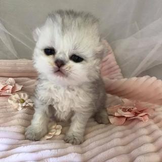 Brody - 2 weeks