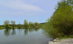 Flachsee - Wundervolle Flora und Fauna