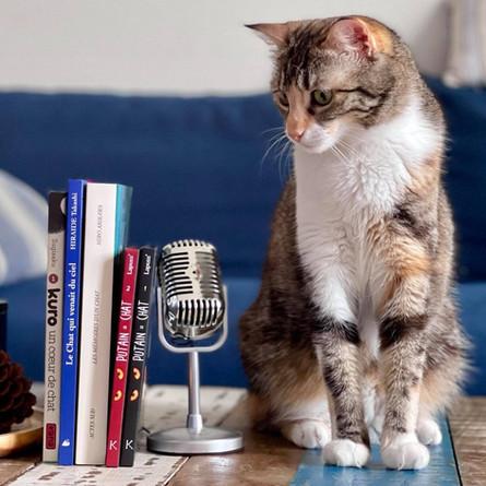 EPISODE 5 - Notre sélection spéciale chats