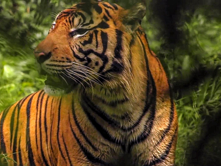 Premiering on Discovery Channel Asia, New Wildlife and Nature Series, Frontier Sumatra