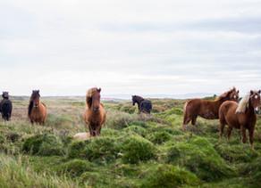 Message des chevaux  grandir ensemble