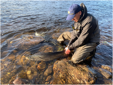 Kitsa river (tributary of Kola) may be the best fishing trip around Murmansk...