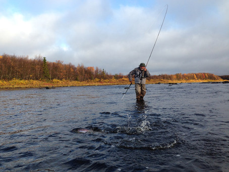 Summing up salmon fishing season 2015. Part 3