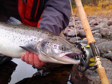 Salmon fishing in a cold water. Chavanga autumn 2013