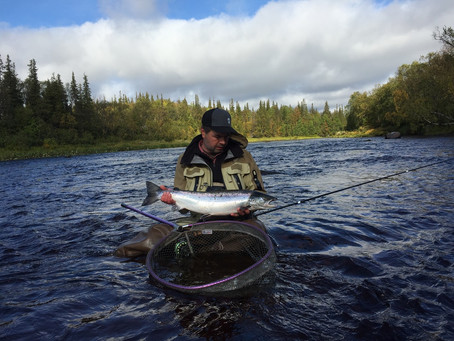 Atlantic salmon fishing in Kola Peninsula. Autumn season. Weeks 01-14 September