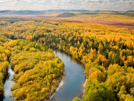 Taimen fishing. Giant fish. Tugur river. Habarovsk region.