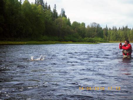 Dry fly salmon fishing