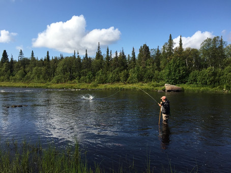 Atlantic salmon fishing in Kola Peninsula. Autumn season. Week 23-30 August