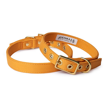 Harvest Yellow + Brass All Weather Collar