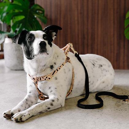 TIGGY LEATHER DOG HARNESS - BLACK